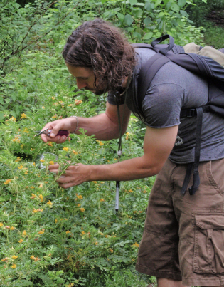 Victor Izzo doing research collecting beetles from potato plants.