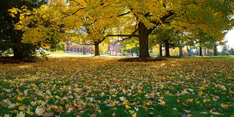 UVM in fall