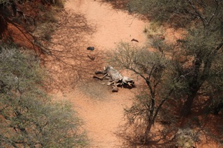 Poached elephant carcass. Photo credit: John Heminway, writer, producer and director of <em>Battle for the Elephants</em>