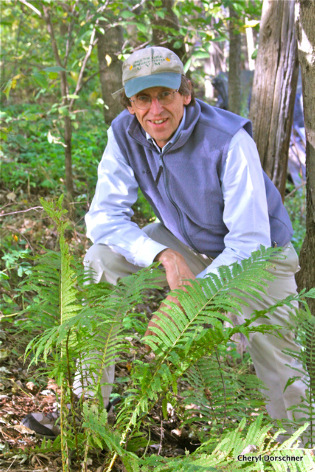 David Barrington checking on ferns in woodland setting