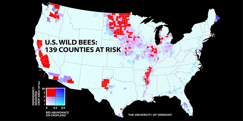 Map: wild bees at risk
