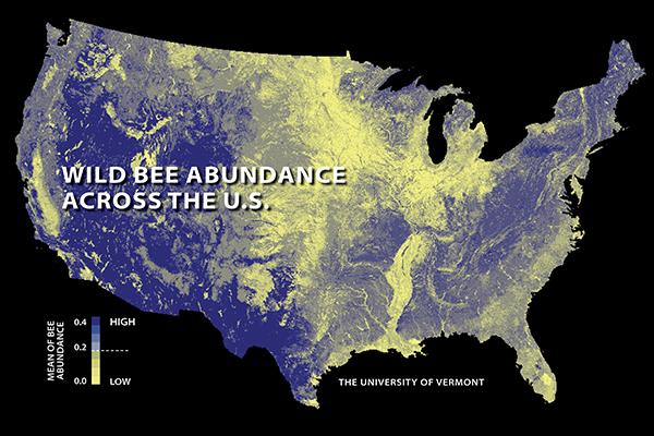 bee abundance map