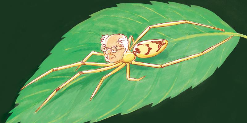 Bernie spider