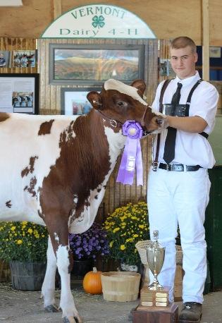 4-h member and Ayrshire fall calf