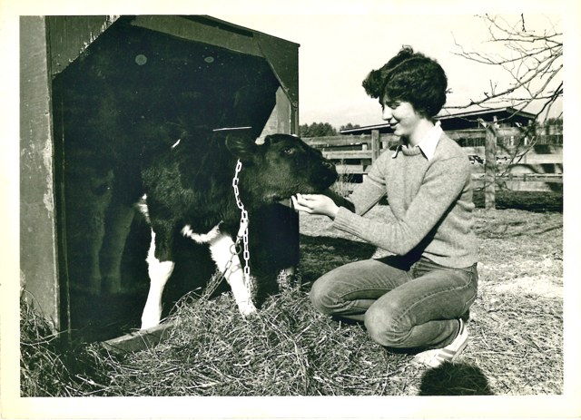 Girl feeding calf