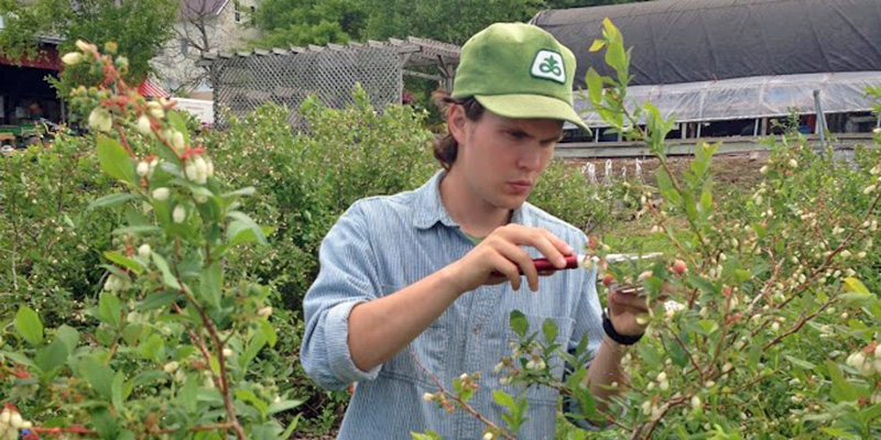 Doctoral student Charlie Nicholson conducts research with blueberry farmers to understand how landscape factors influence pollinators such as native bees.