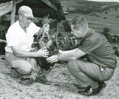 Circa 1950s photo of Dedrick and guy holding turkey by its feet.