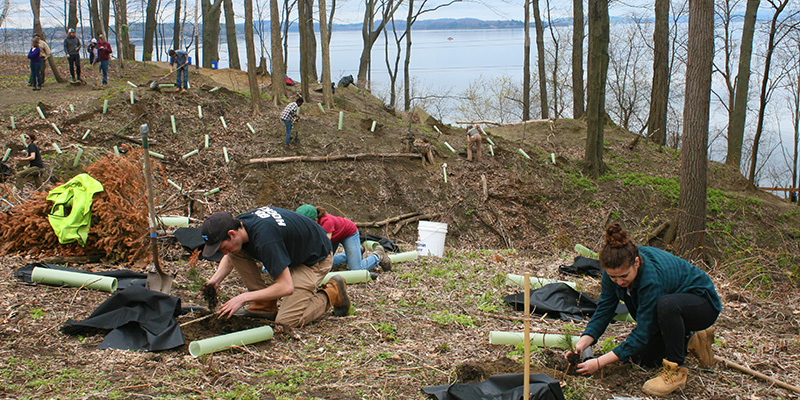 Students planting trees along steep banks of Lake Champlain