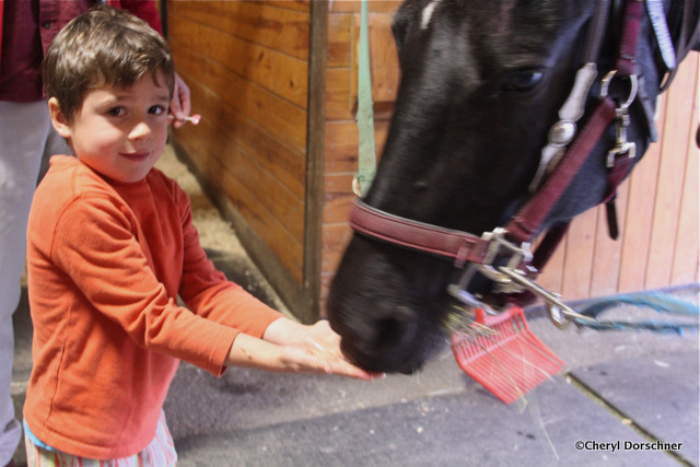 boy feeds horse