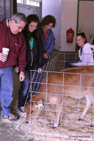 family looks at baby calf.