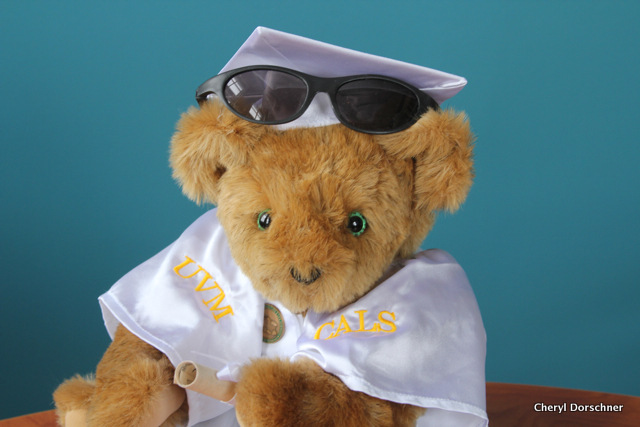 teddy bear wearing white robe, sunglasses says UVM CALS