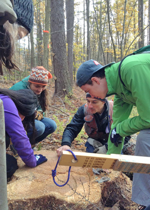 Rubenstein School students work with research forest manager Ralph Tursini to grade Japanese larch trees.