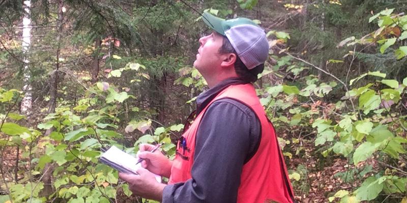Josh Halman in the field assessing tree crowns.
