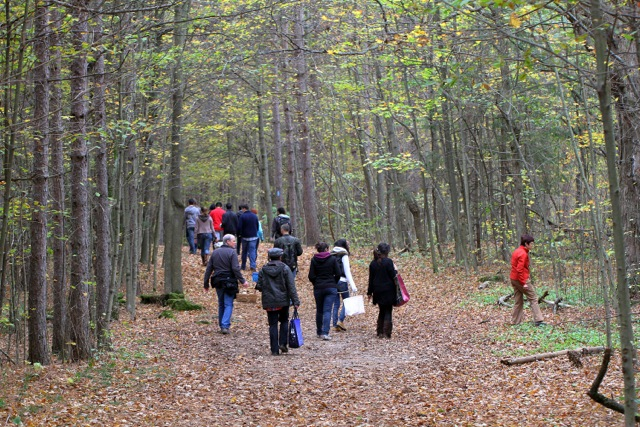 people searching forest path for mushrooms