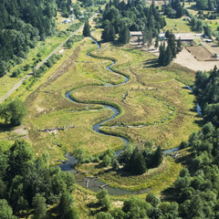 Meanders restored in Johnson Creek at the 30-acre Schwietzer floodplain in Portland, Oregon