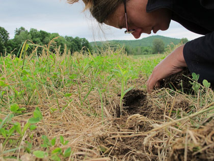 heather darby digging in soil with her hands