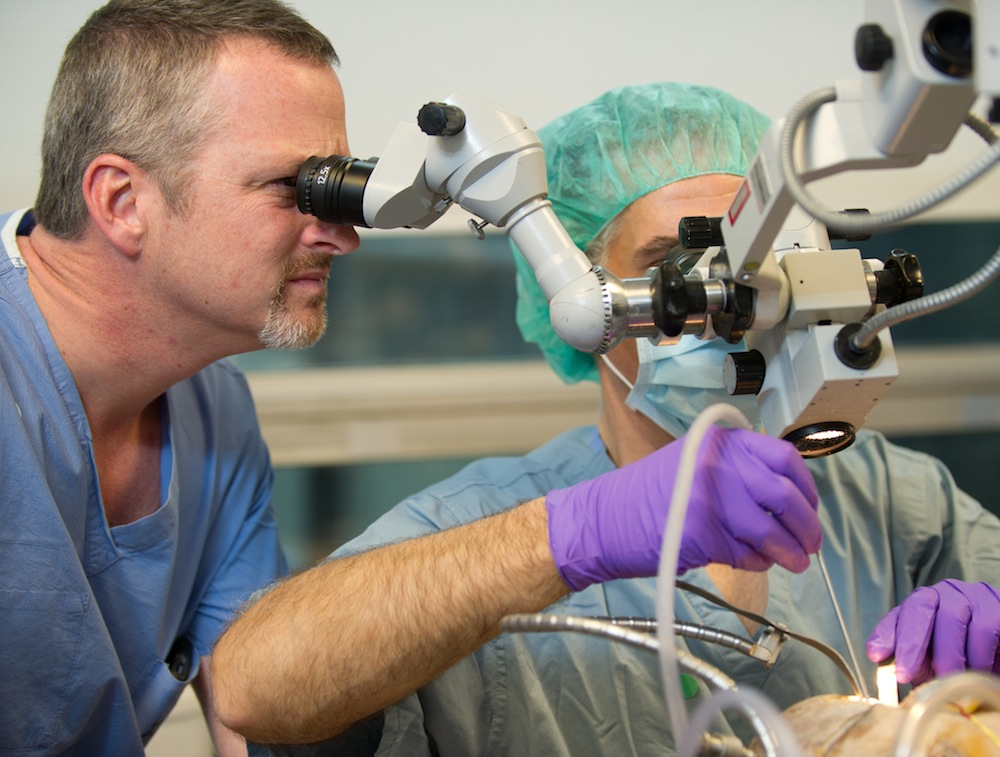 Michael Horgan, M.D. assists at the operative microscope.