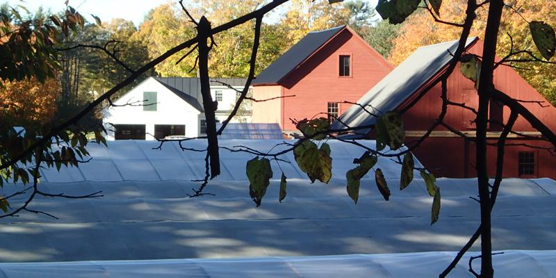 farm barn and greenhouses