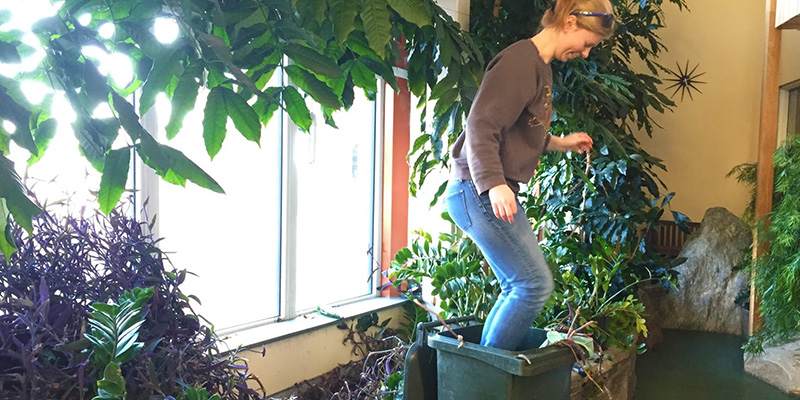 Greening of Aiken intern Rachel Wood packs plant material into a composting bin as part of spring cleaning in the Aiken Center Solarium.