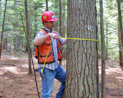 Alum René Germain at work in the forest.