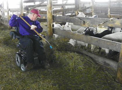 farmer using wheelchair feeding goats