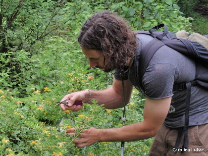 Guy with scissors collecting plants and insects in field
