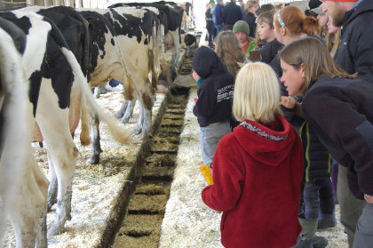 4-H participants and Holstein cows