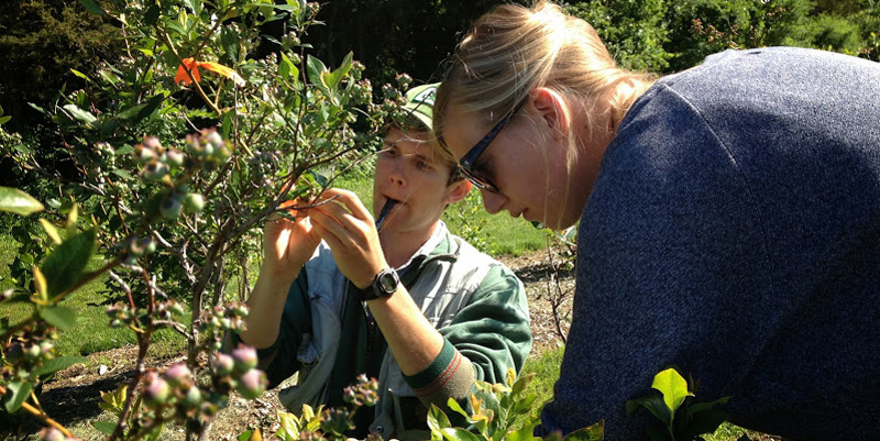 National Science Foundation graduate research fellowship Charlie Nicholson University of Vermont Gund Institute For Ecological Economics Rubinstein School of Environment and Natural Resources bee pollination