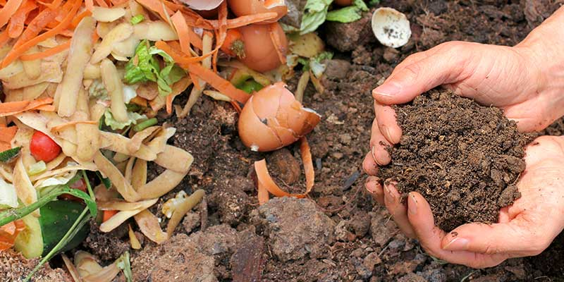 carrot and potato peel, vegetable scraps, egg shells, hands holding composted soil