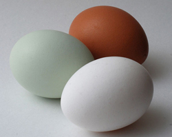Three eggs: brown, white and blue