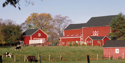 farm animals and red barns