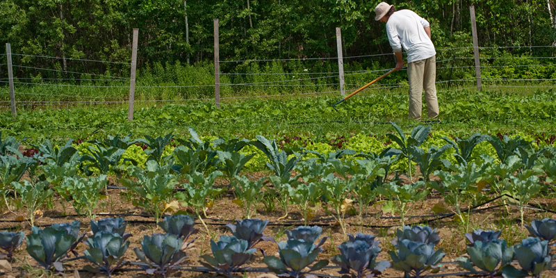 UVM Horticulture Farm