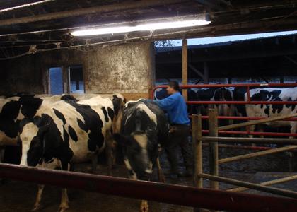 dairy worker