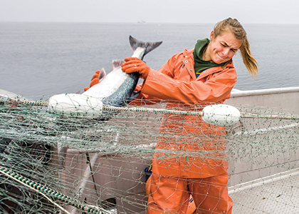Claire Neaton wrestling a very large fish out of a fishing net in a boat.