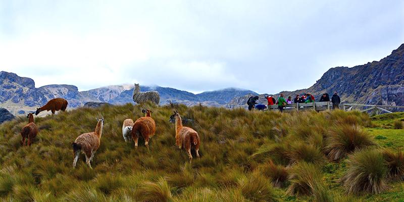 Grass Paramo