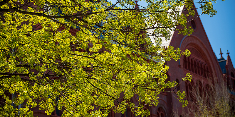 Williams Hall at the University of Vermont with tree blooming
