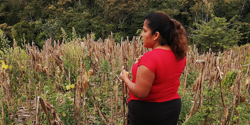 woman standing in milpa field