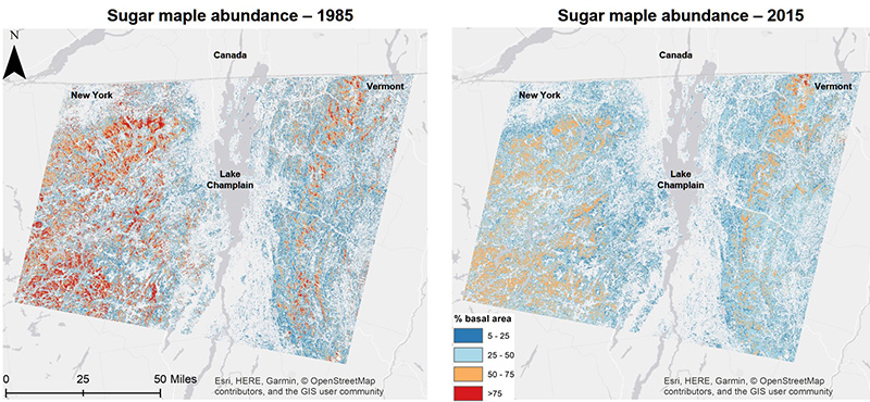 Two maps showing changes in sugar maple basal area from 1985 to 2015