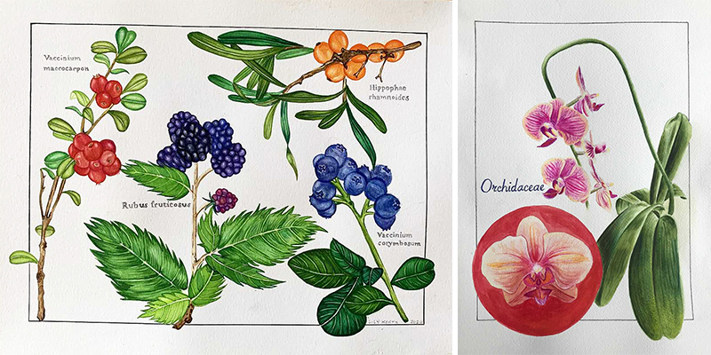 watercolor illustrations of berries and flowers