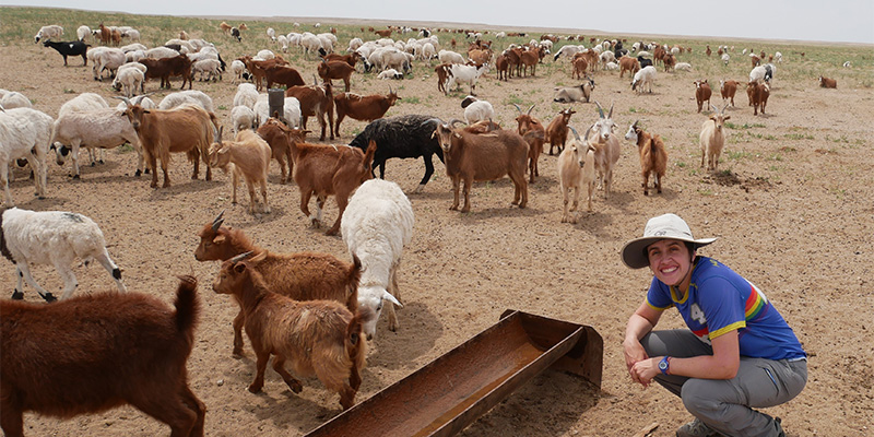 Young woman poses in front of herd of goats on Mongolia grassland