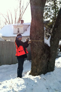 Student conducts maple and ash survey in Winooski, Vermont.