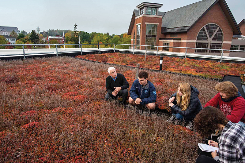 students and professor on top of Aiken's green roof in a field of plants.