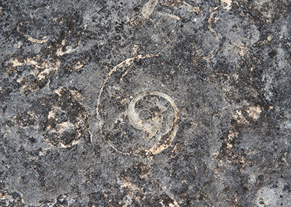 spiral fossil in Chazy reef