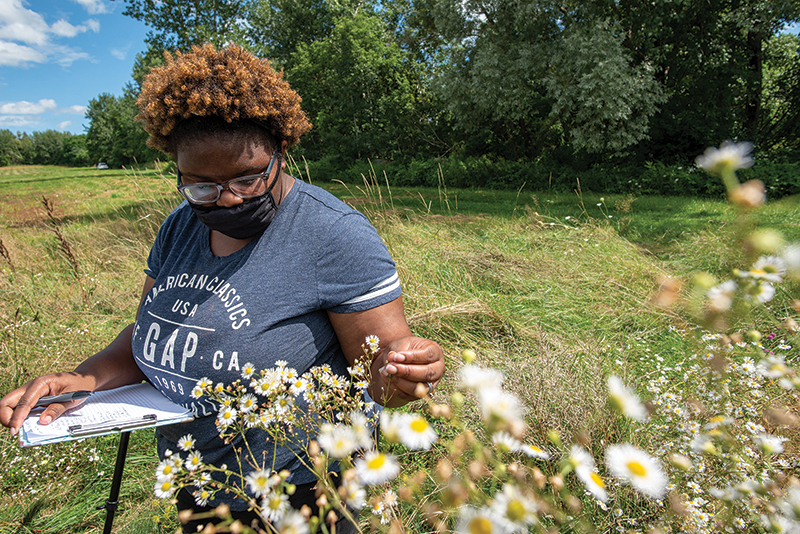 Jessica Cole in a wildflower meadow counting bees