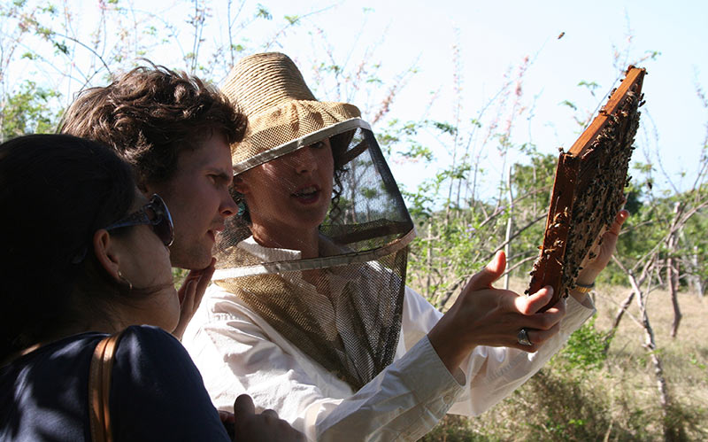 Students studying beehive