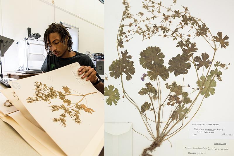 Gabriel Martin '18 and geranium specimen