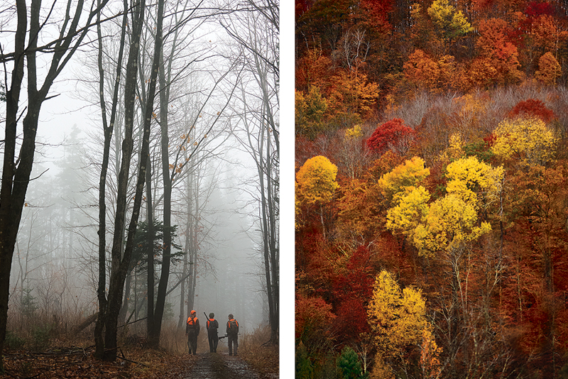 Hunters walking through foggy woods. and golden fall foliage seen from overhead.