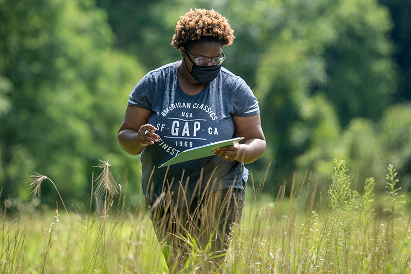 Graduate student Jessica Cole counts bees in UVM's Horticulture Farm
