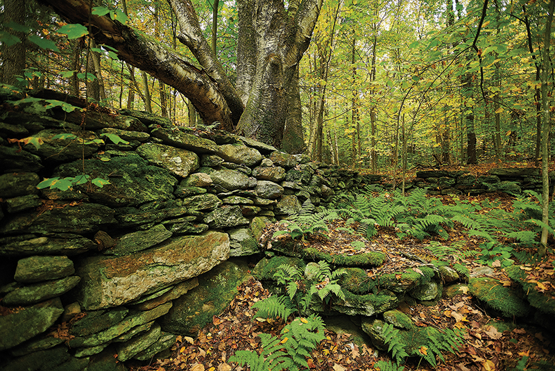 stone wall and old tree deep in a leafy forest
