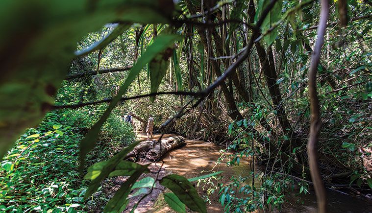 Reasearchers wading through a stream in the jungles of Madagascar searching for spiders